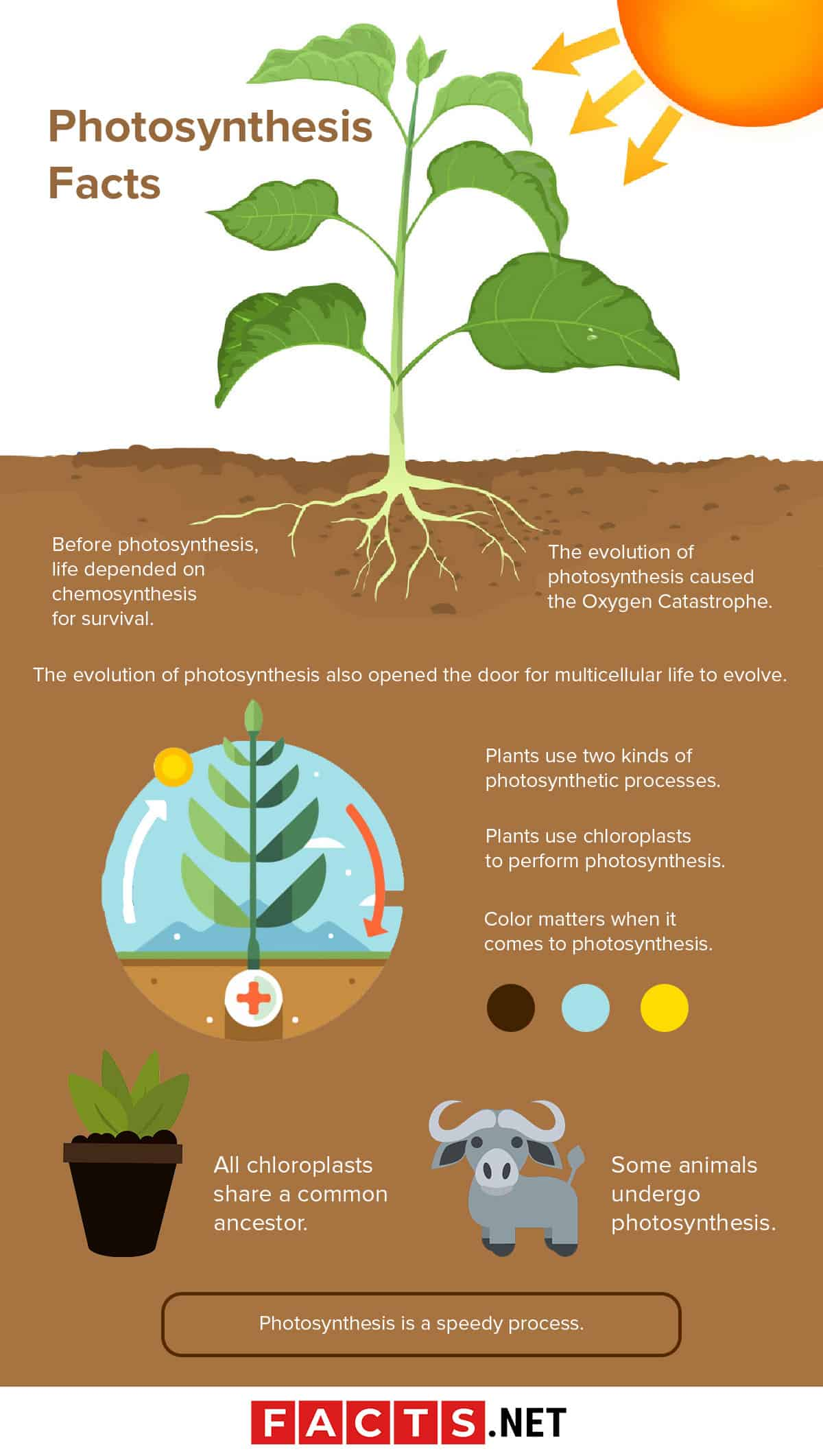 Photosynthesis Facts Infographics