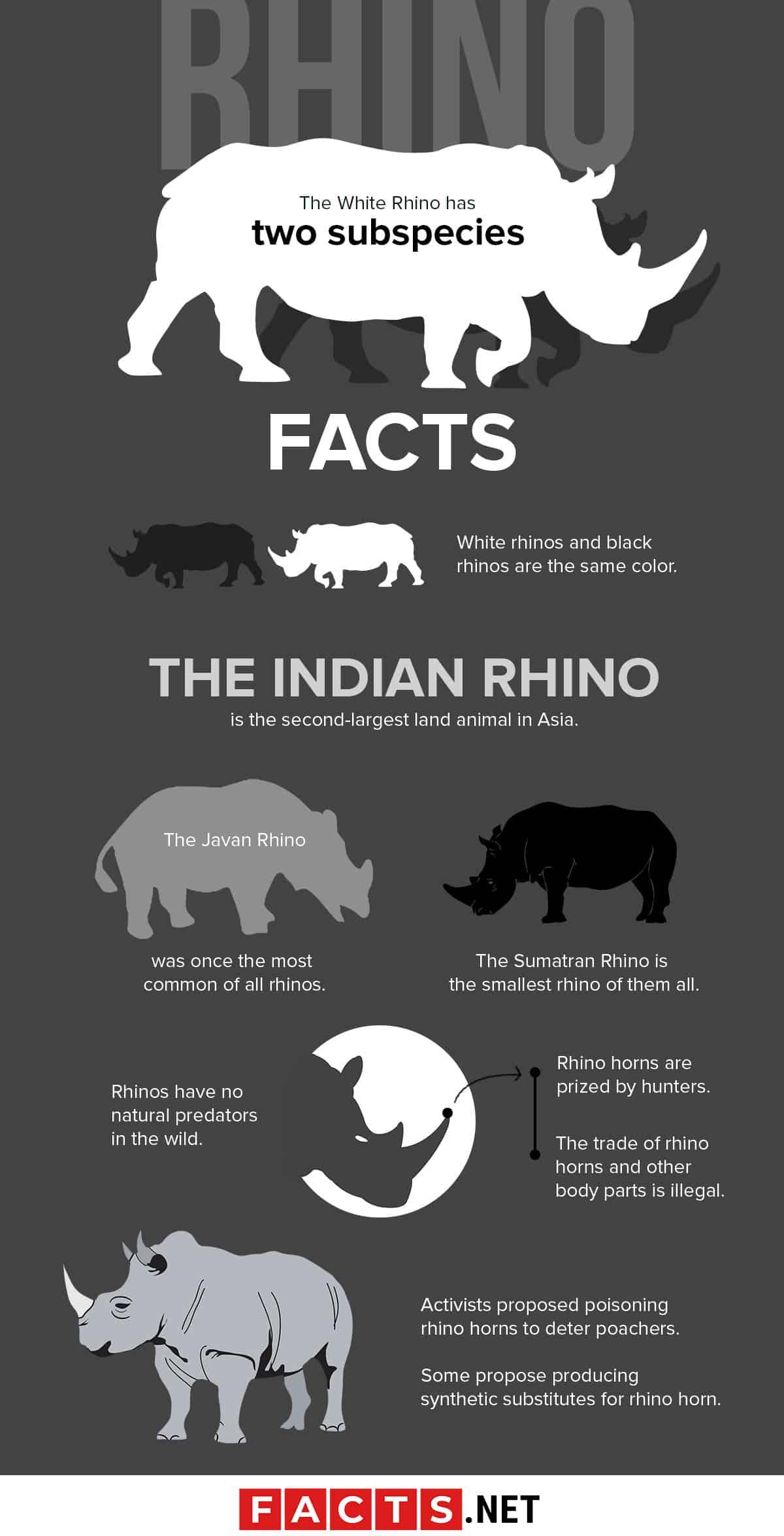 Rhino Facts Infographics