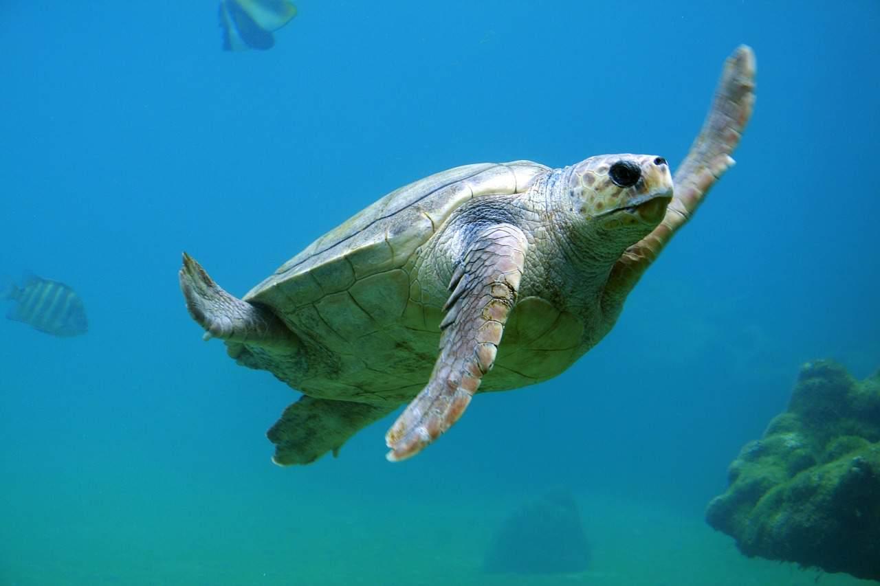 sea turtle, antarctica facts