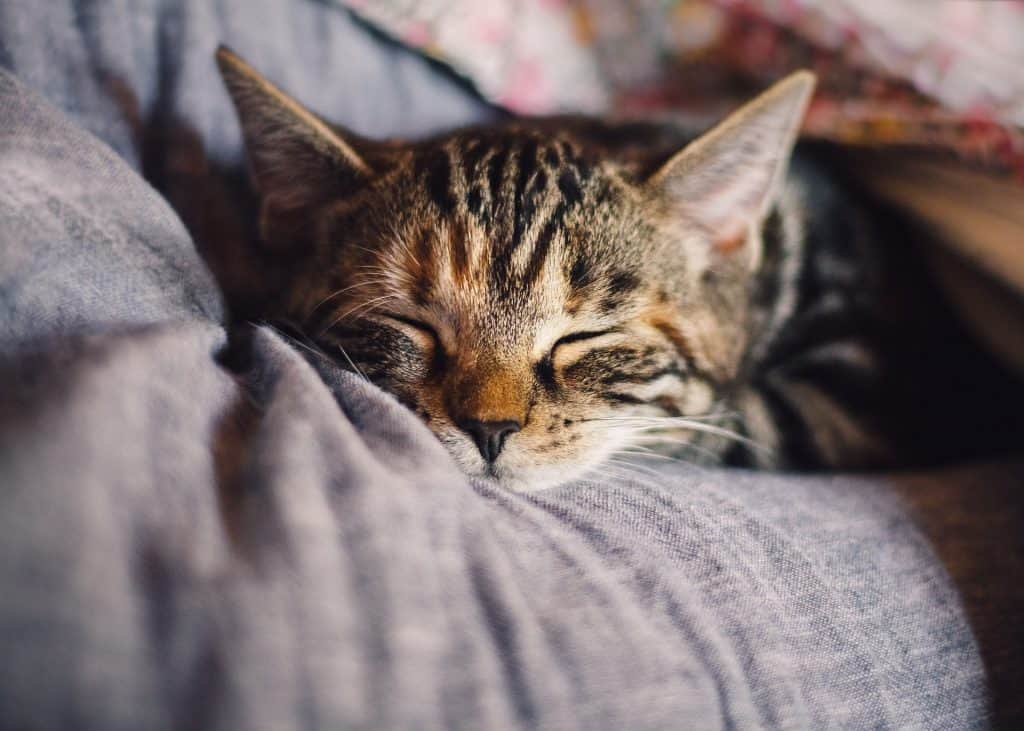 sleep facts, cats