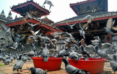 temple, kathmandu facts