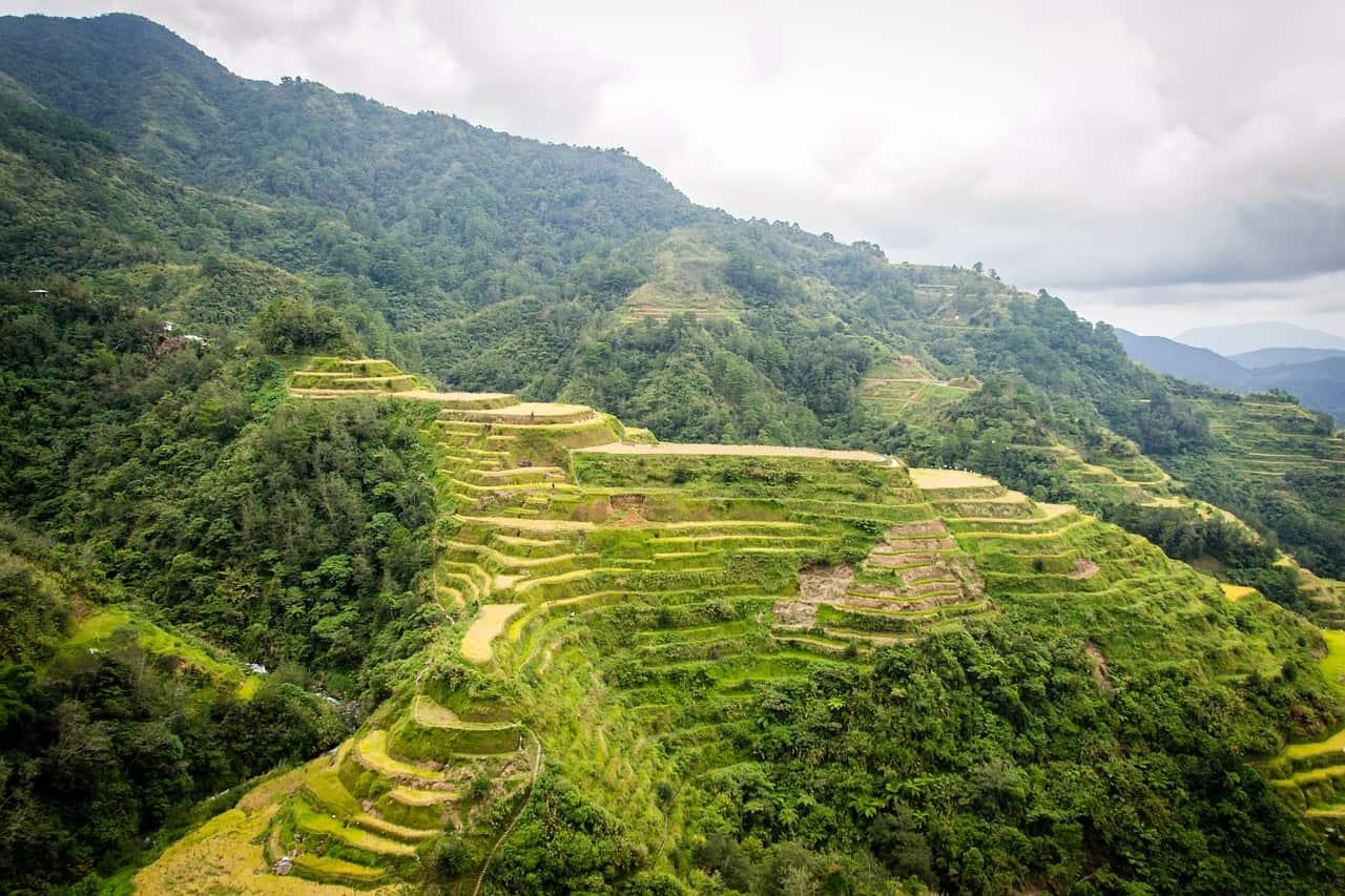 banaue rice terraces, rice facts