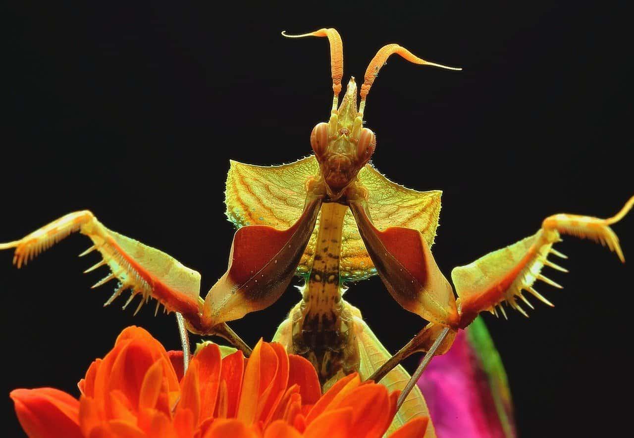 Mantid | Praying Mantis cover image