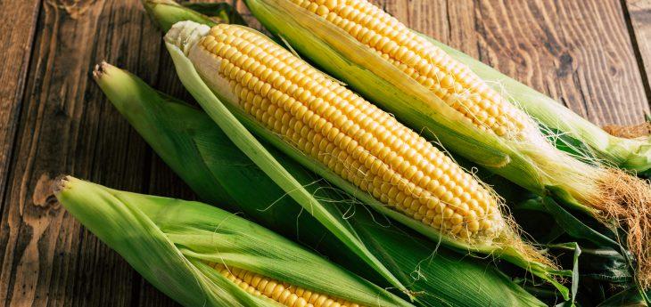 corn, corn facts