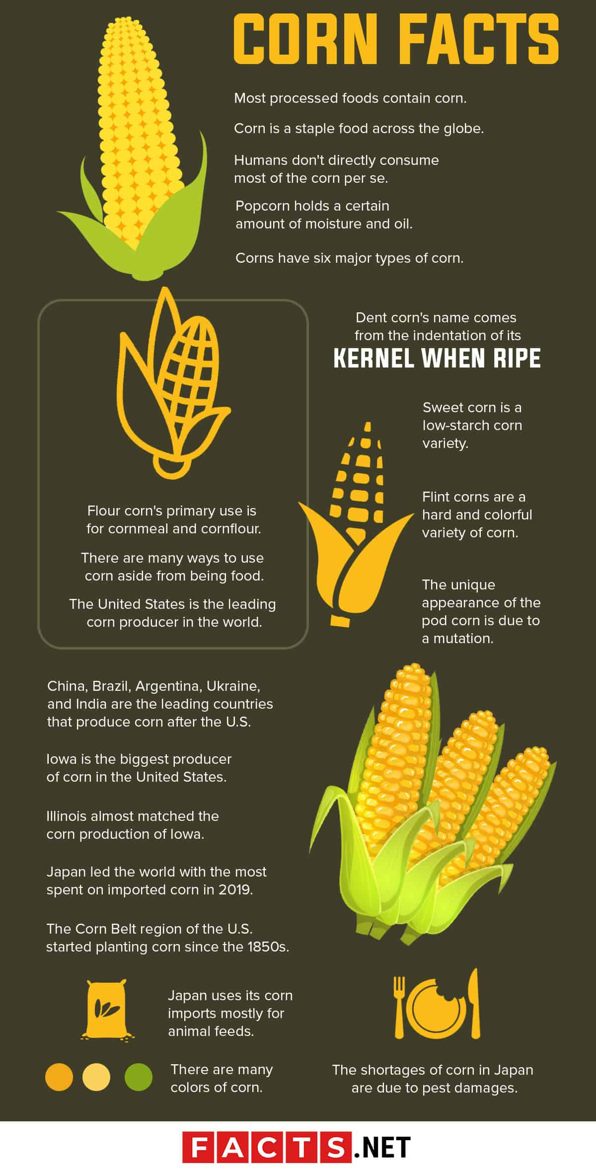 Corn Facts Infographics