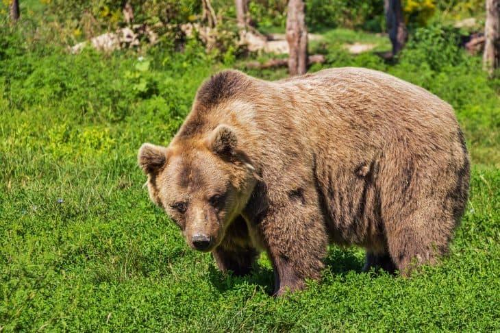 Bear Facts, Bear