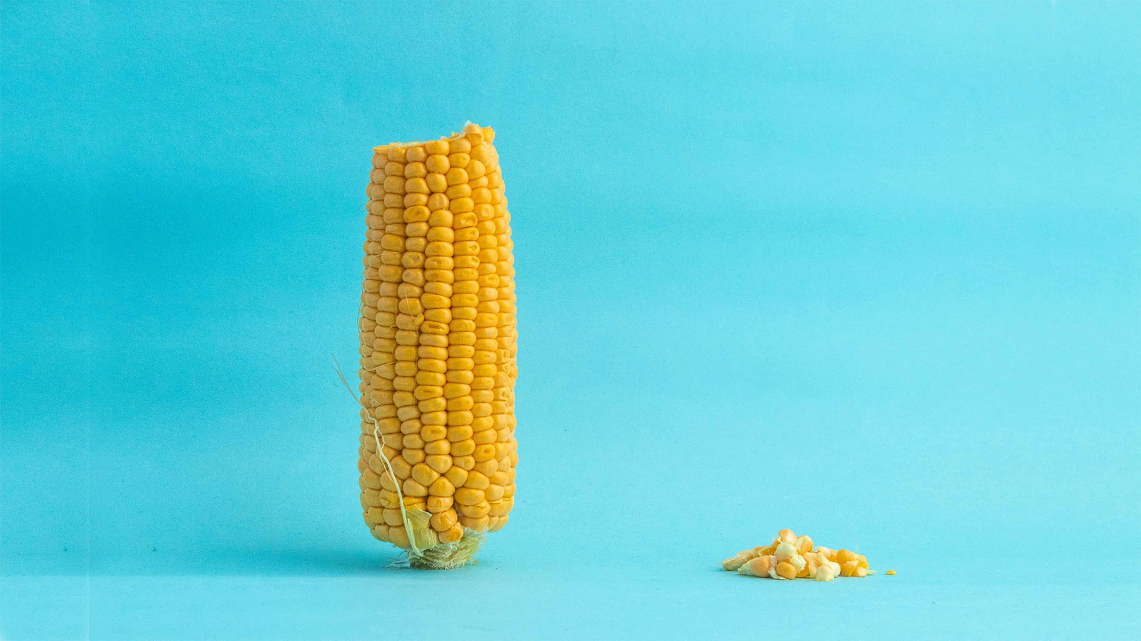 corn, corn kernels, corn facts
