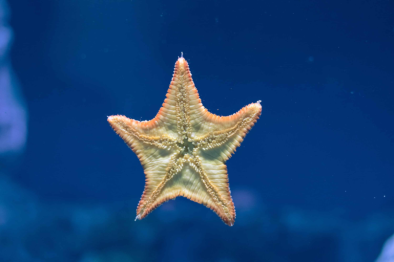 starfish facts