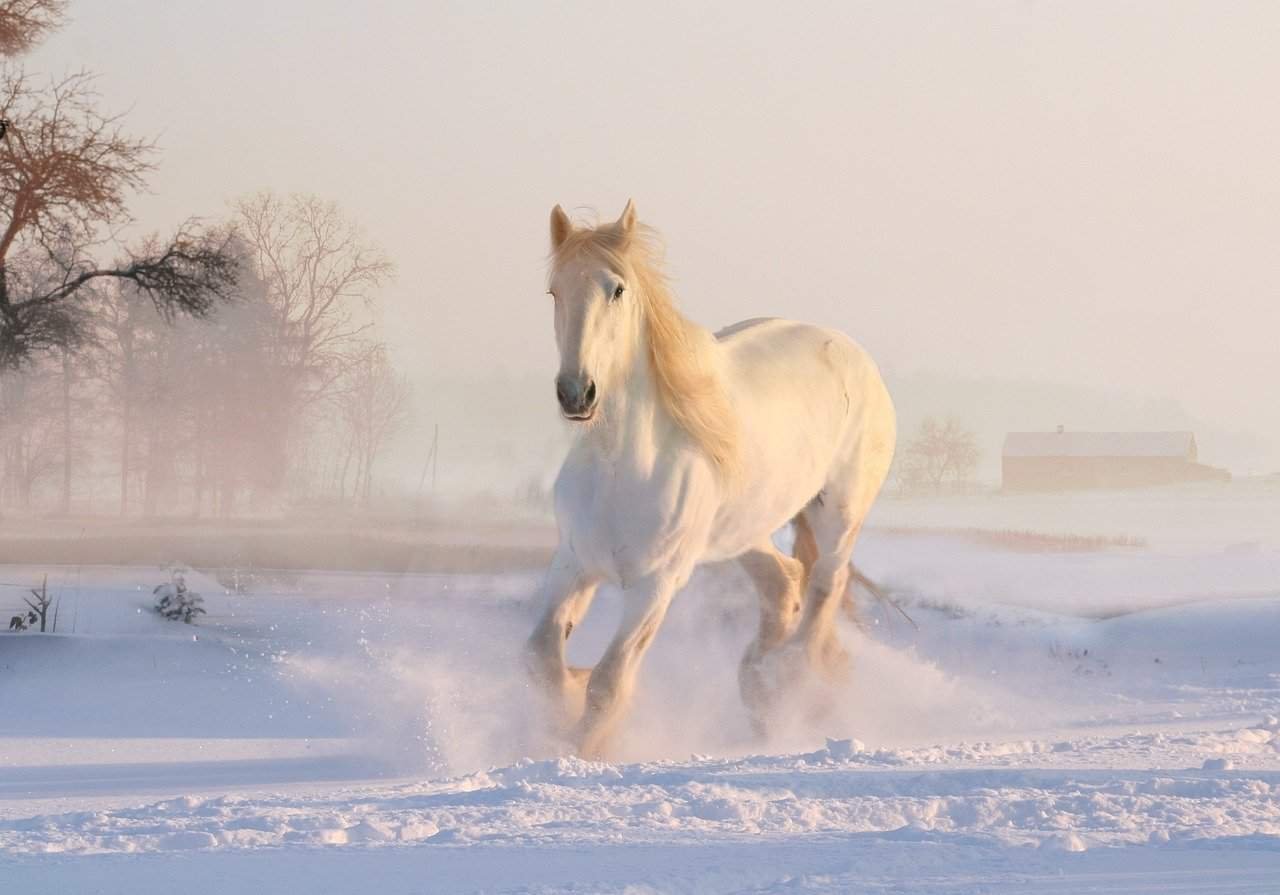Horse Facts, Horse Running in Snow