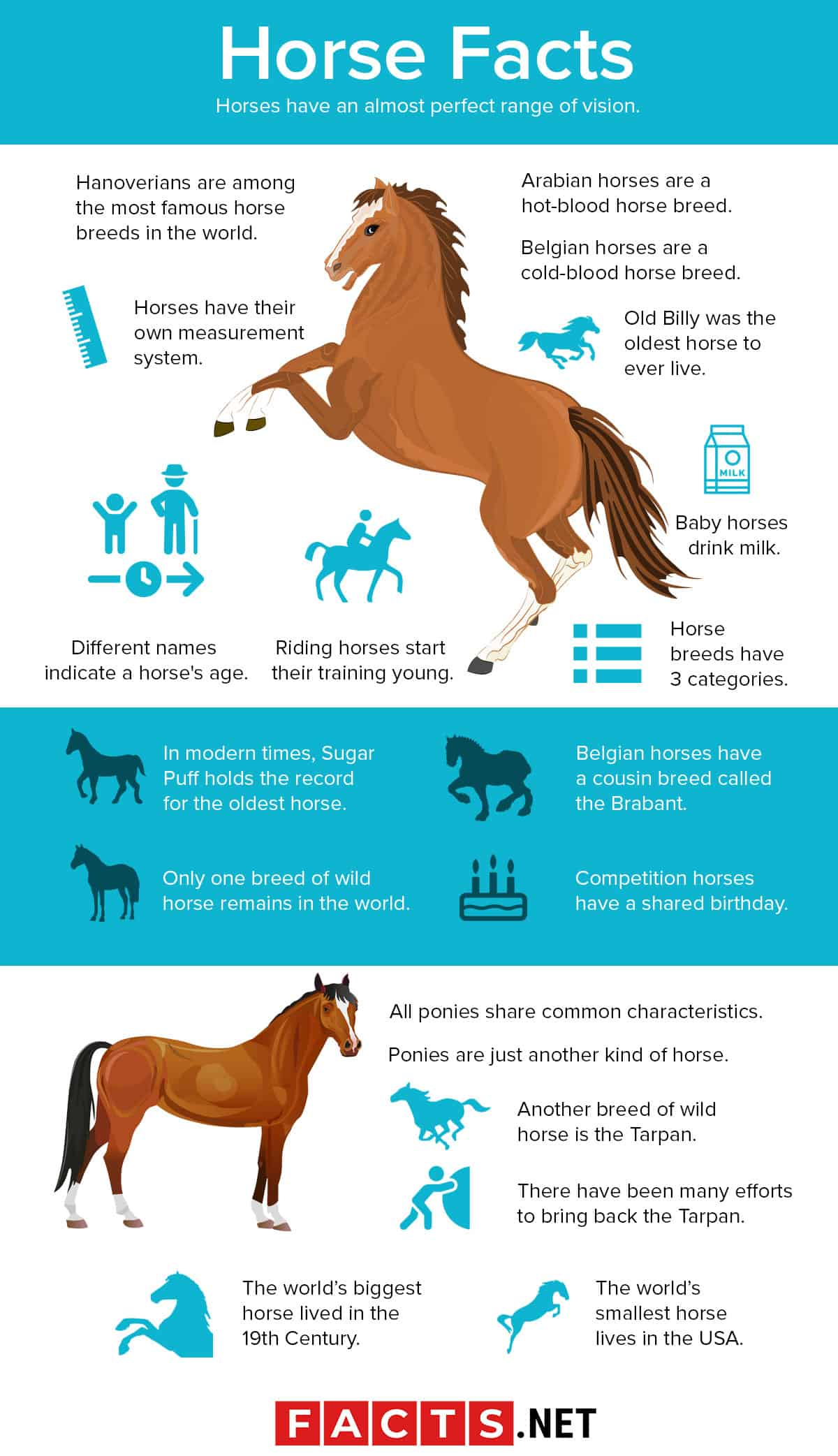 80 Interesting Horse Facts You Probably Never Knew About
