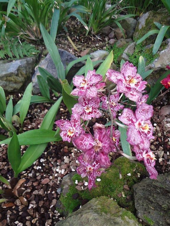 orchid, ecuador facts