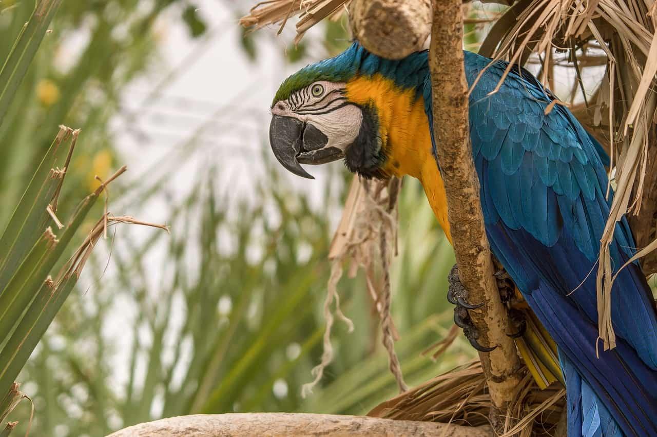 macaw, amazon rainforest facts