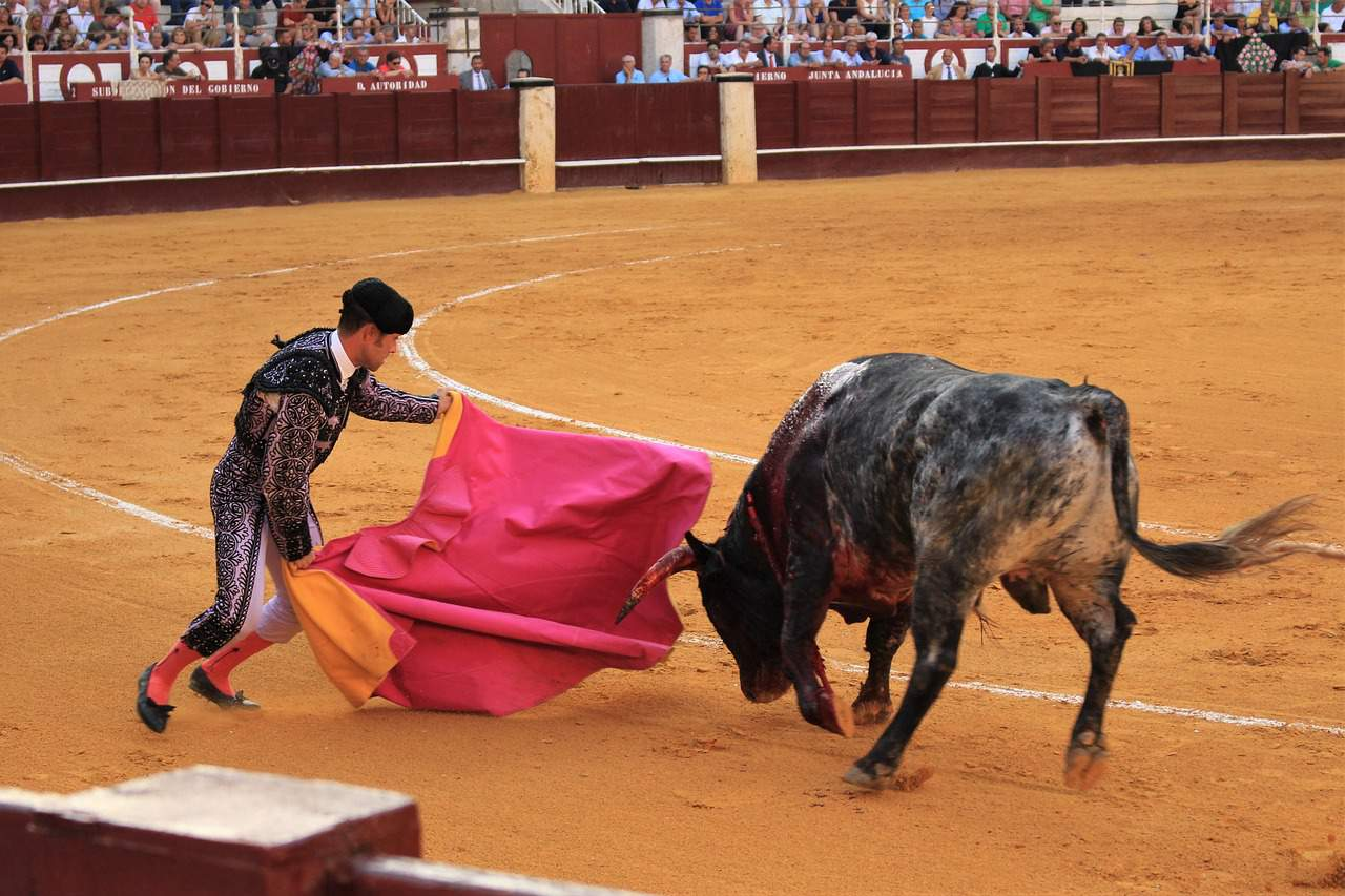 spain facts, bull fighting