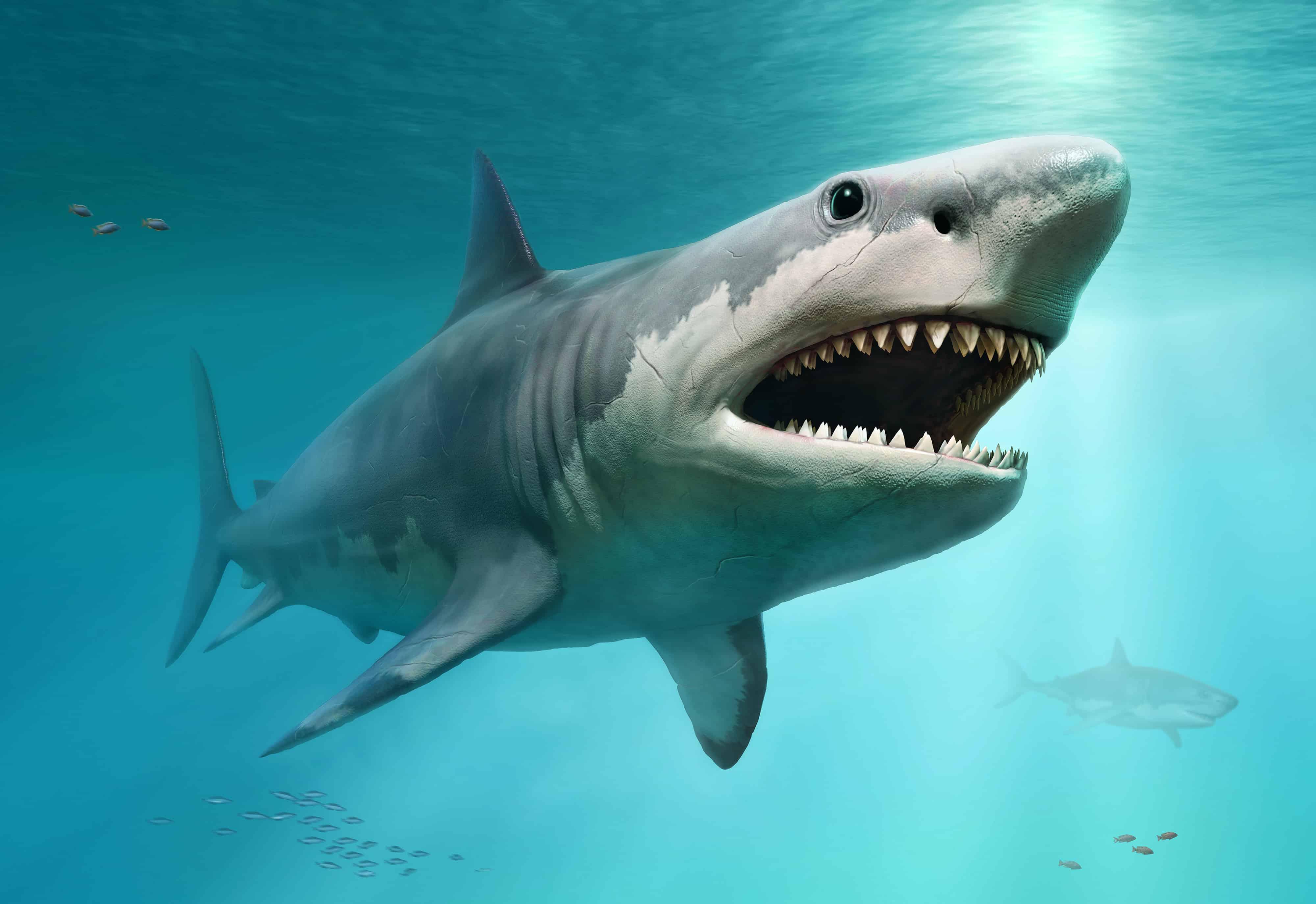 World's Biggest Shark Ever Captured: 40-Feet Long |Worlds Largest Bull Shark