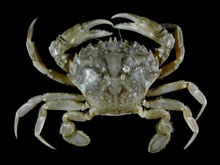 Crab Facts, Crab