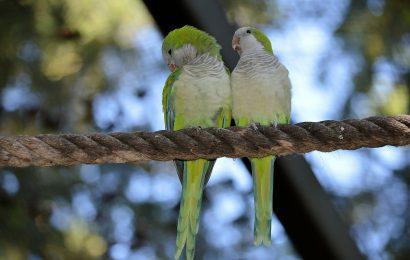 Love Birds, Love Birds