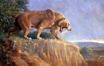 saber tooth tiger