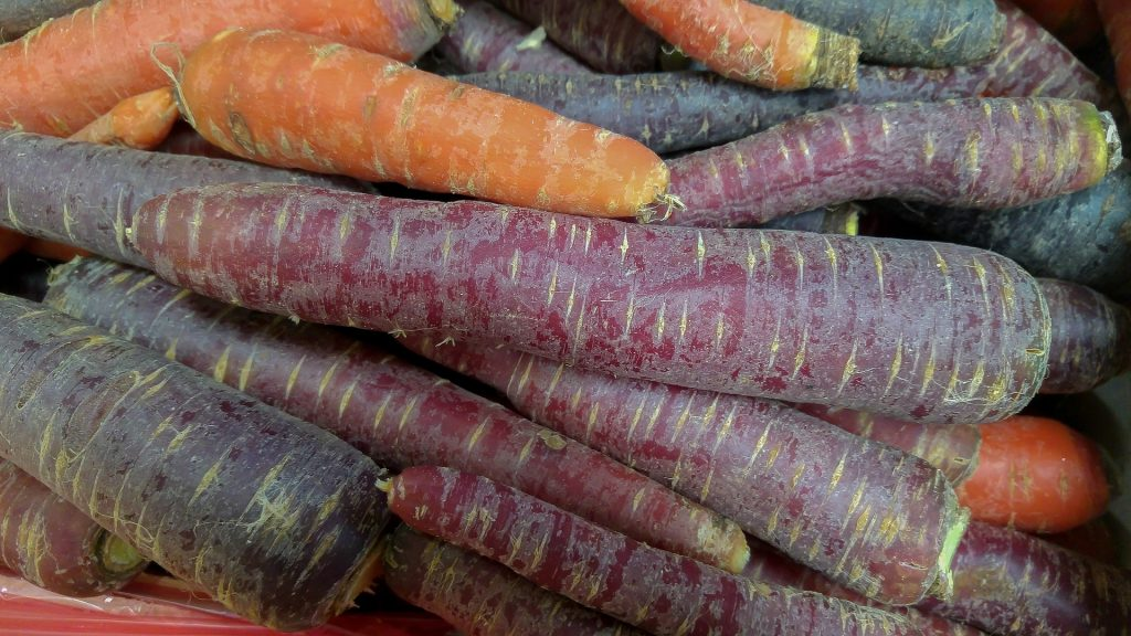 carrot facts, eastern carrot