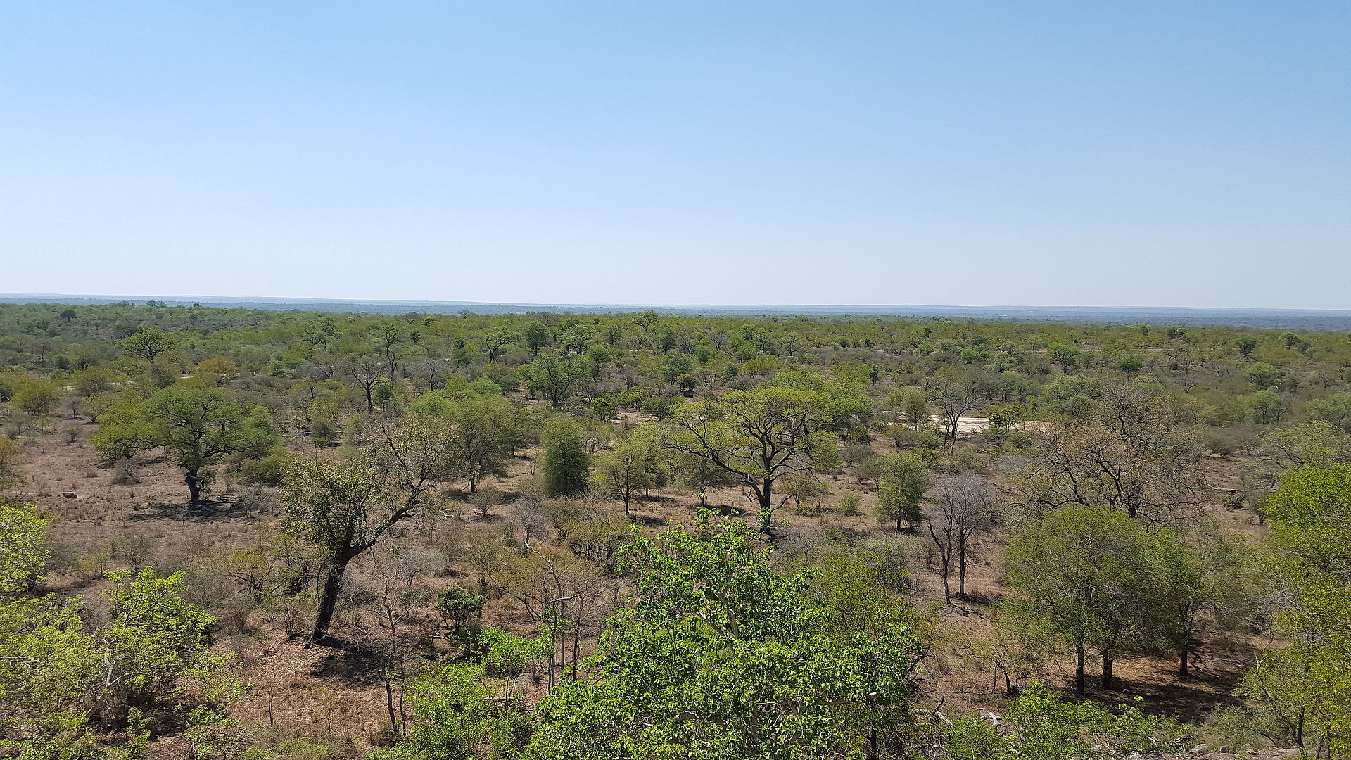 South Africa Facts, South African Savannah