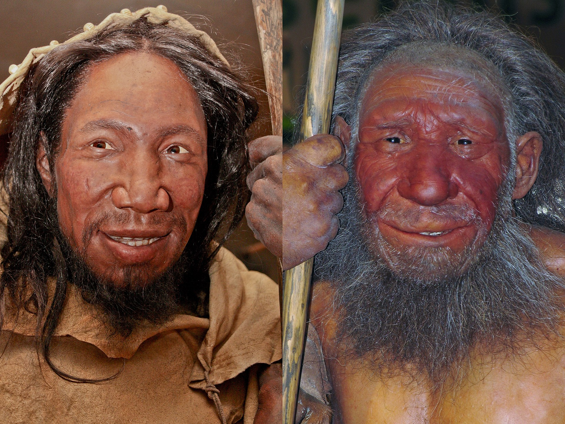 Neanderthal and Human, Neanderthal vs Human