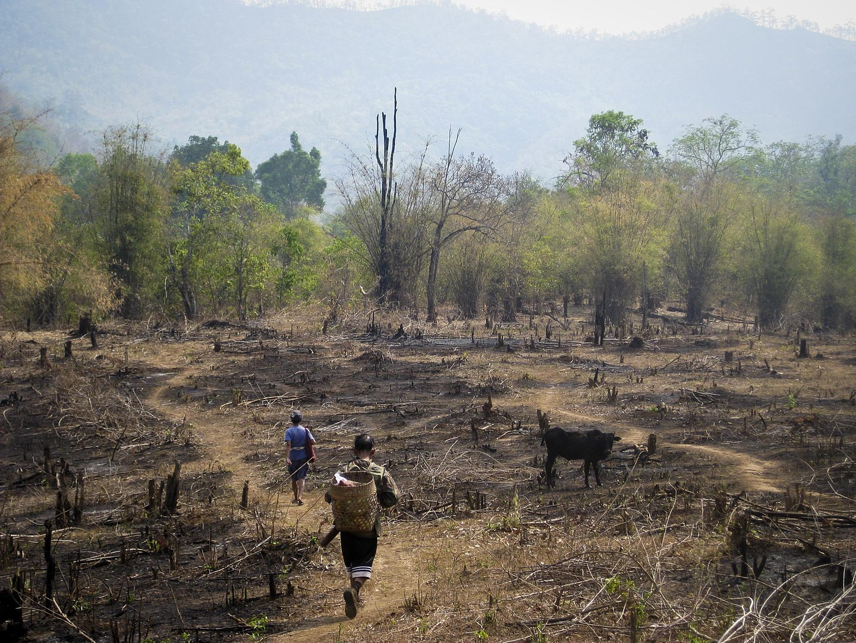 Rainforest Facts, Slash and Burn