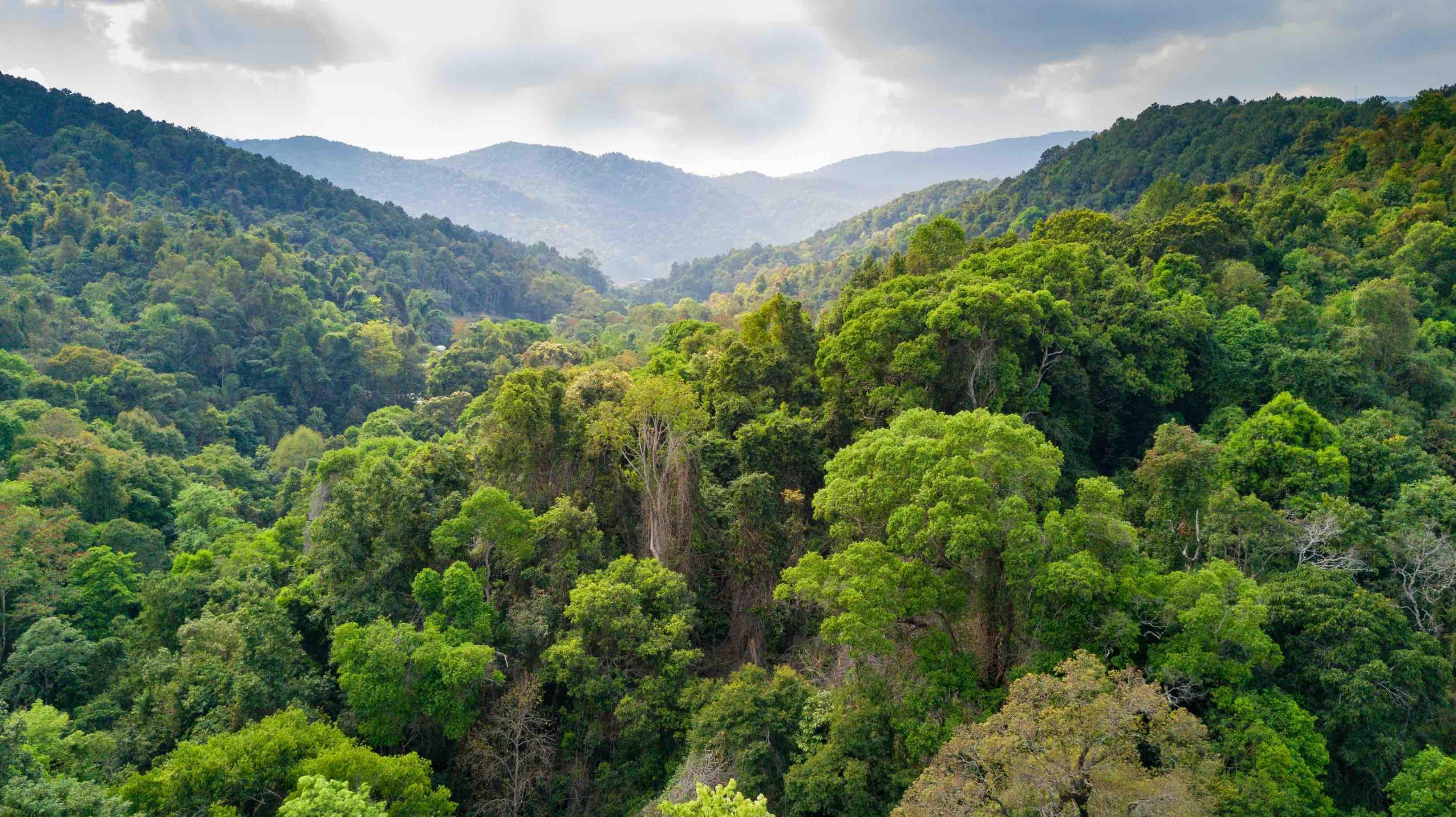 rainforest in thailand